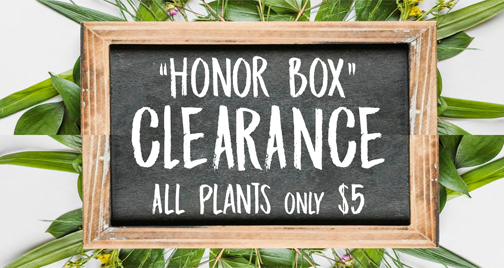 Honor Box Plants on Clearance
