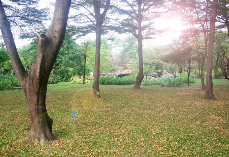 yellow_leaves_in_park.jpg