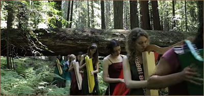 Harps in Redwoods