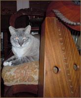 Suzanne's Cat
