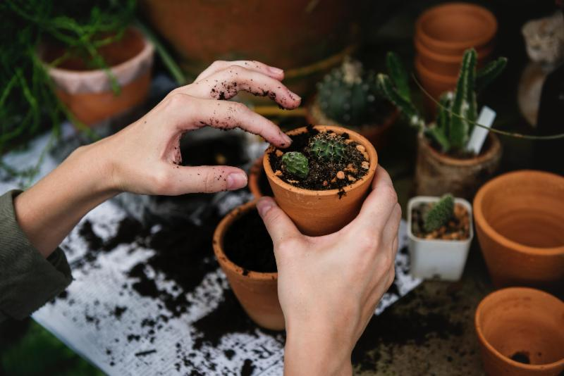 Image of a person_s hands planting a cacti garden