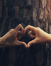 Photo: Two hands making a heart with a tree trunk in the background.
