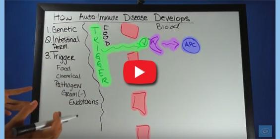 How Auto-Immune Disease Develops