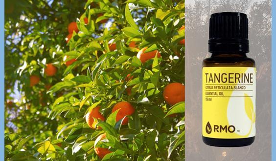 Tangerine Esssential Oil