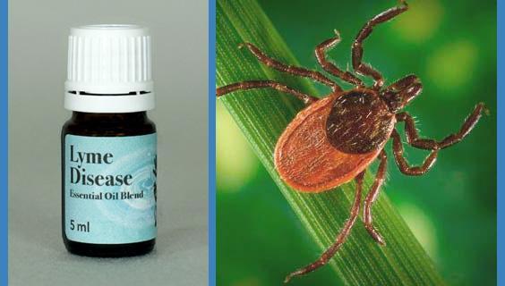 Lyme Disease Essential Oil Blend