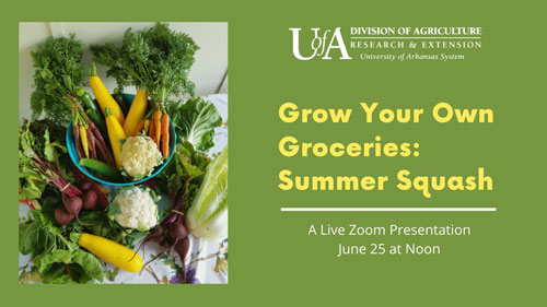 Grow Your Own Groceries: Summer Squash Event Graphic. Live Zoom presentation June 25th Noon