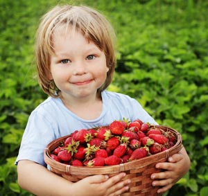 Little Boy with Strawberry Harvest