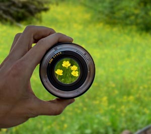 Camera Lens on Buttercup