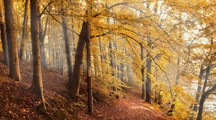 Autumn forest with yellow foliage