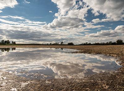 standing water in pasture