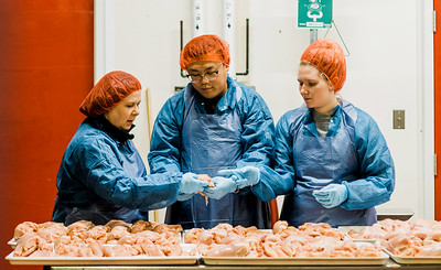 Experts Quality Checking Chicken Meat