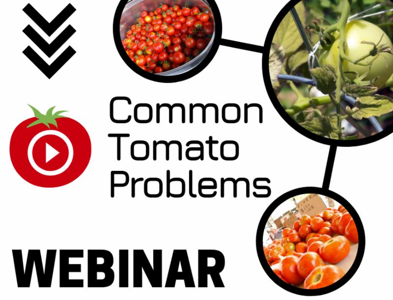 common tomato problems webinar graphic
