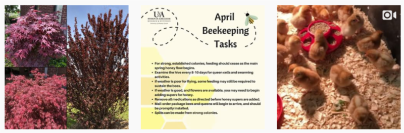 trees_ bee tasks_ baby chicks