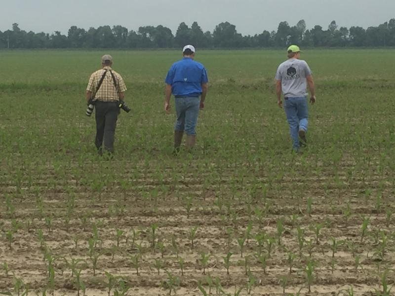 three men walking in a newly planted field