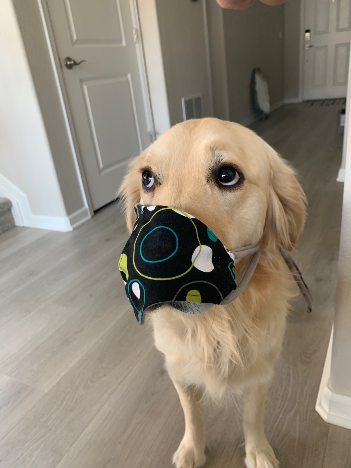 Puppers with mask