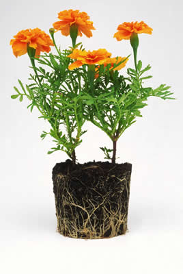 unpotted-flowers.jpg