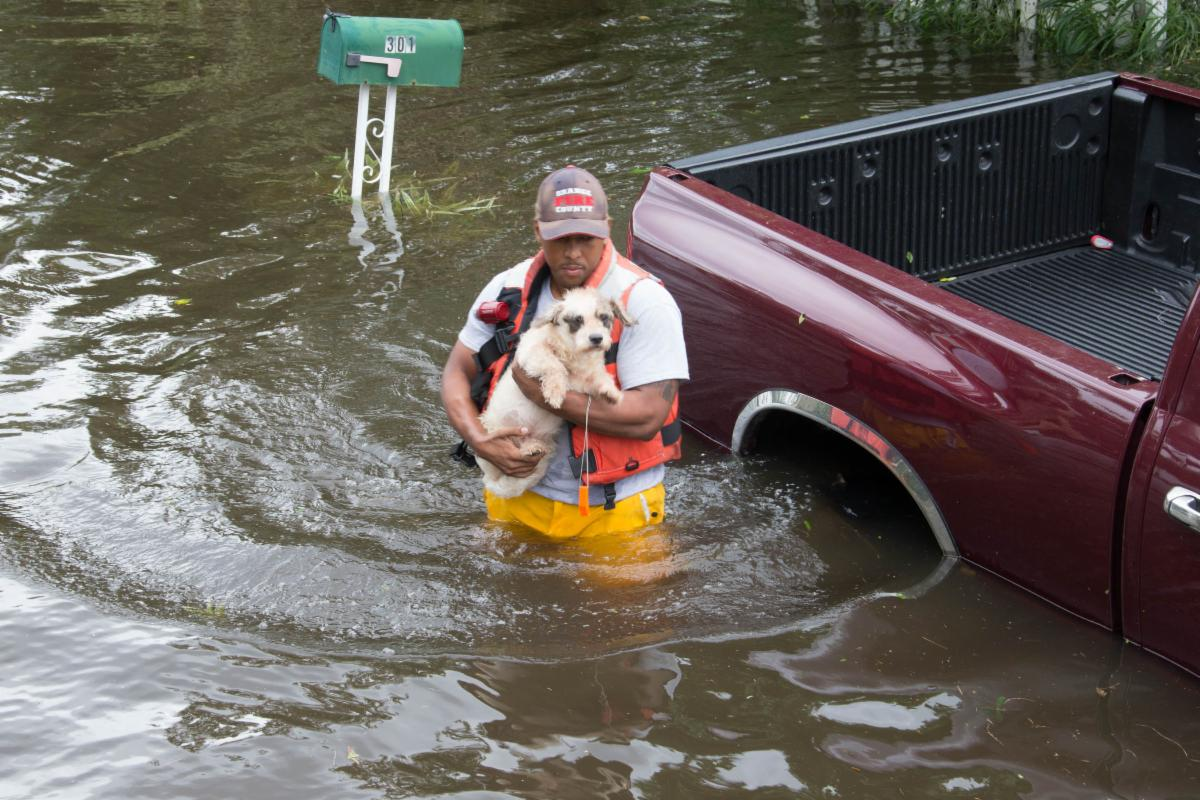 Man rescuing a dog from a flooded area with waist-high water