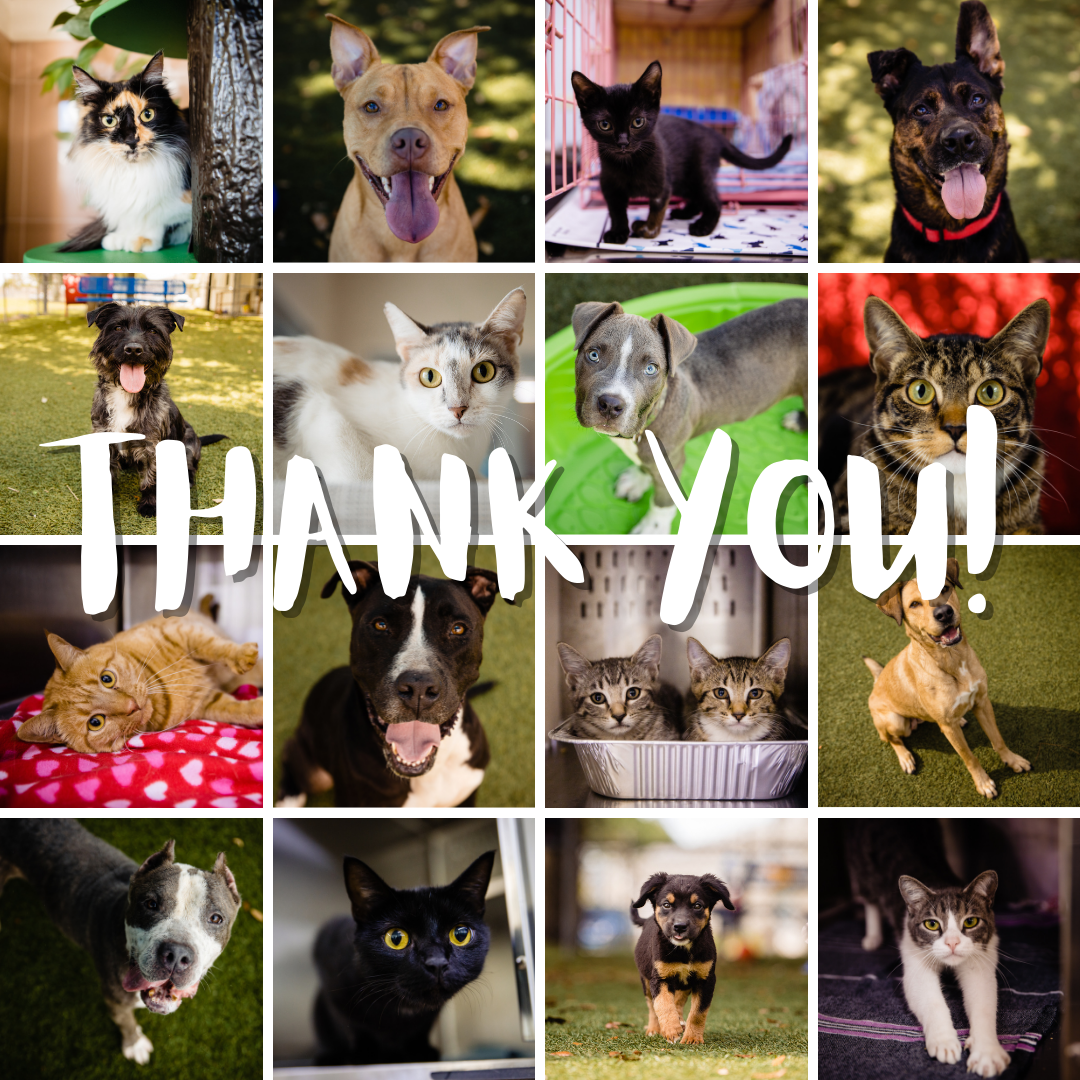 A collage of cats and dogs with the words Thank You