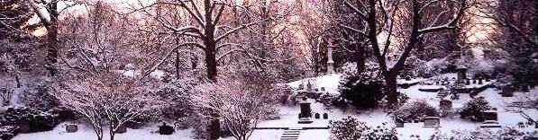 Asa Gray Garden with Snow