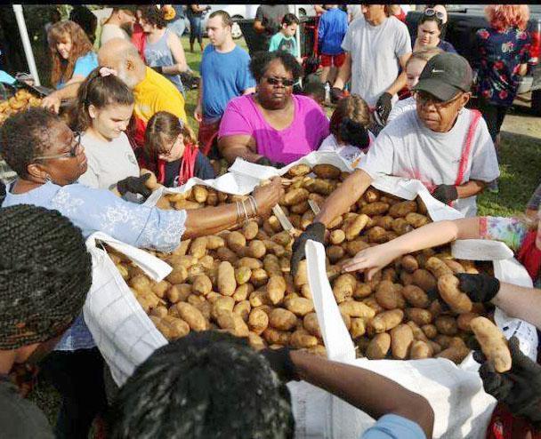 Volunteers sorting potatoes at a crop drop.