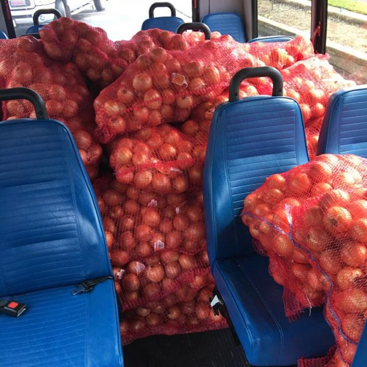Onions in North Carolina
