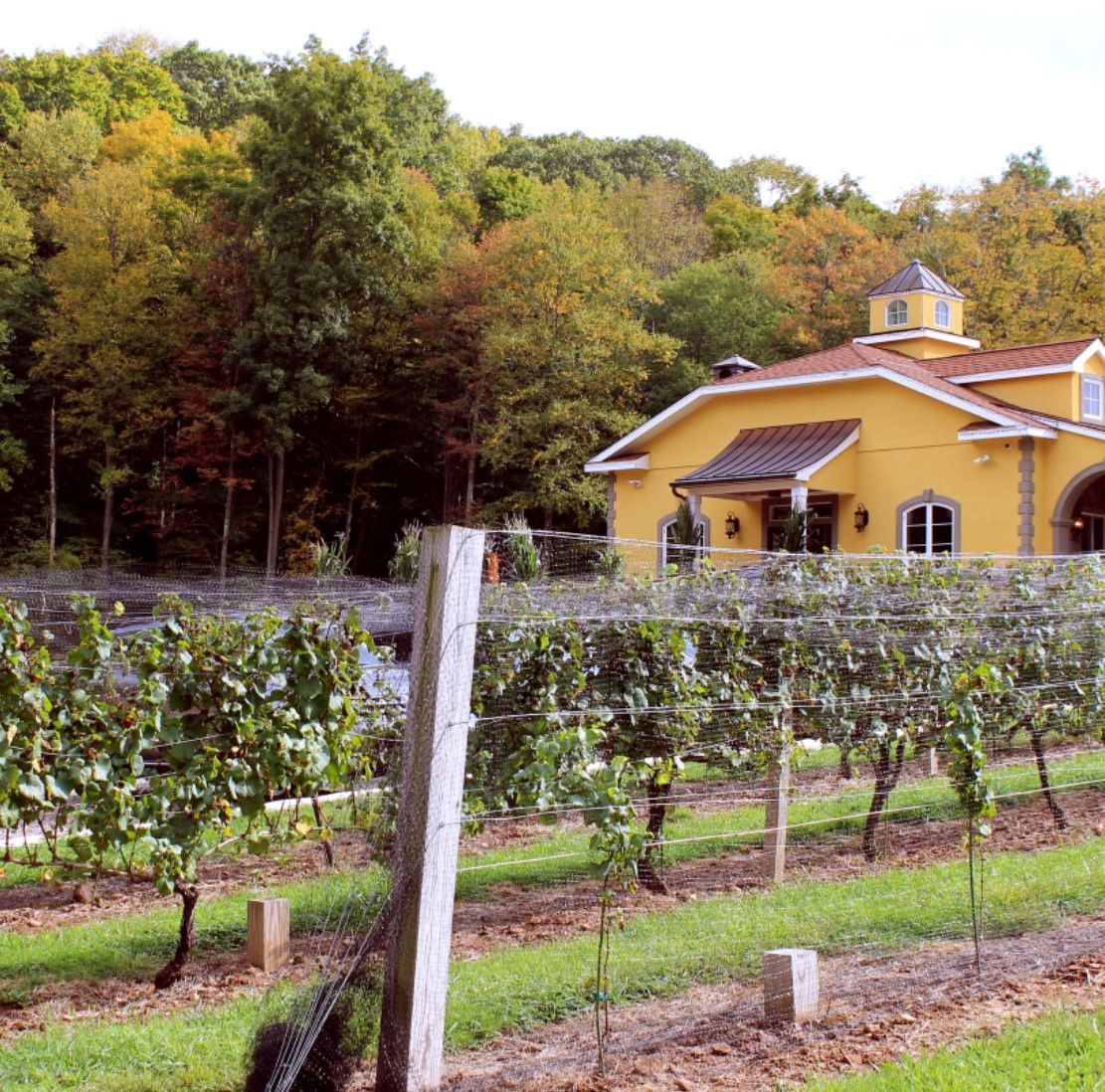 Wallingford - Paradise Hills Vineyard & Winery