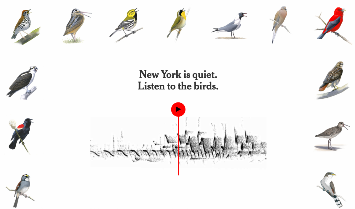 different song birds around a square. in the middle it says New York is quiet. Listen to the birds.