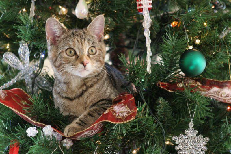 kitten_in_christmas_tree.jpg