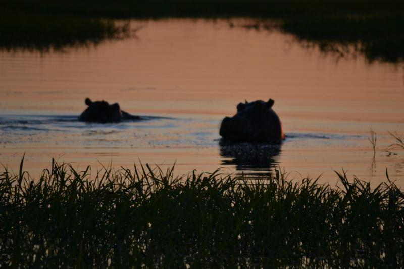 Hippo Sunsets