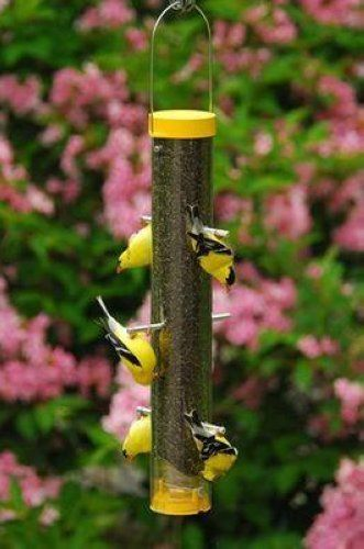 Buying a Bird Feeder: How To Choose The Right Bird Feeder For You