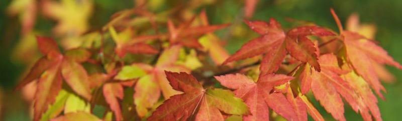 autumn_leaves.jpg