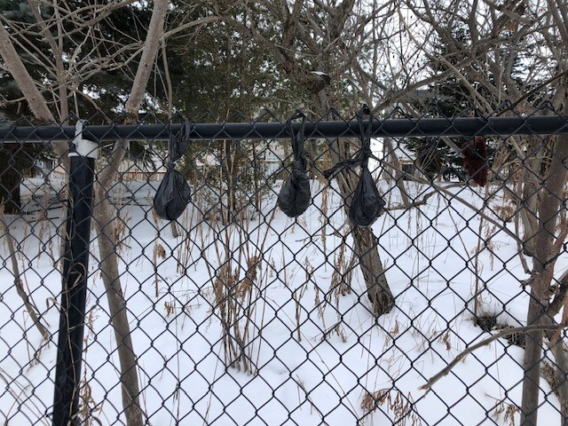 Bags of dog poop hanging from a fence