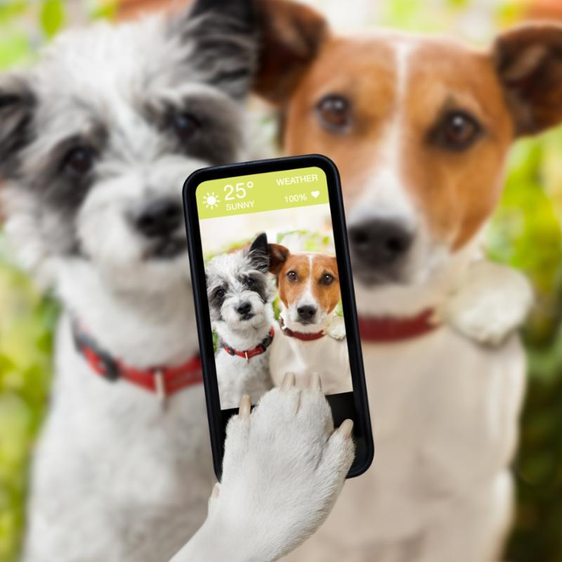 selfie_dogs.jpg