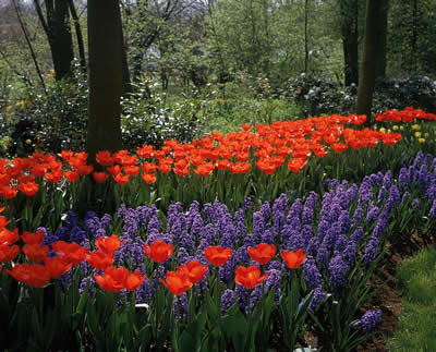 well-manicured-flowers.jpg