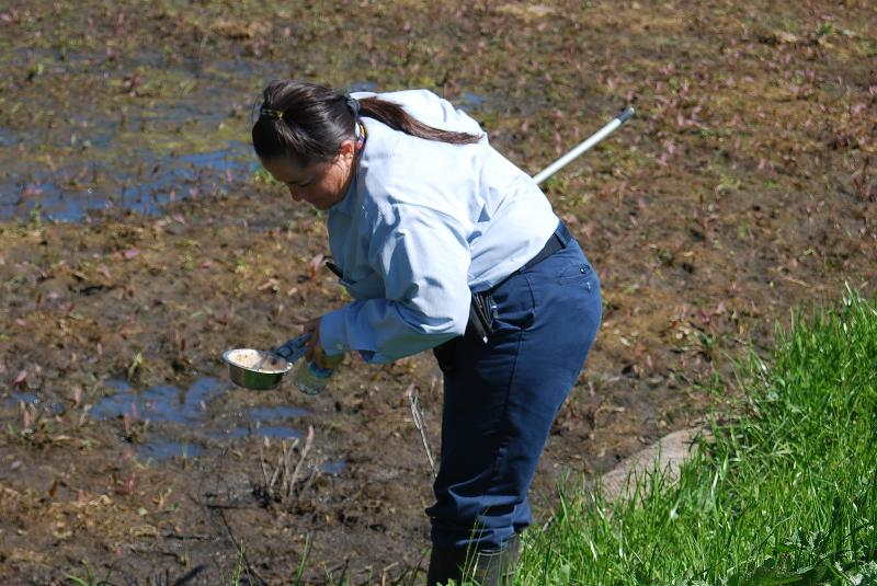 Picture of technicians checking for mosquito larvae