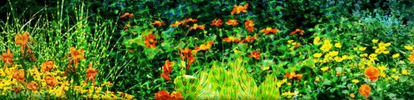 colorful-flowers-banner.jpg
