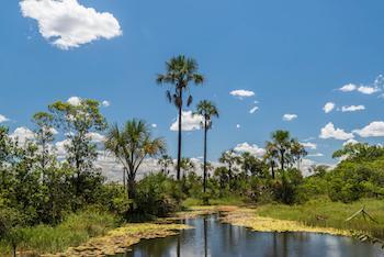 Cerrado landscape