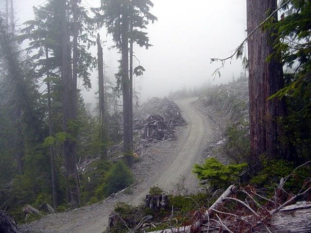 Entering the clearcut