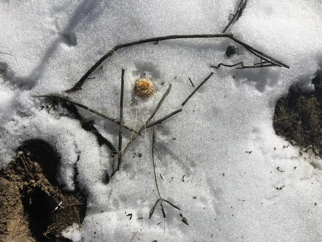 RadJoy Bird in snow