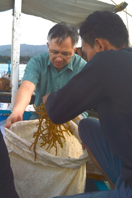 Seaweed farming photo