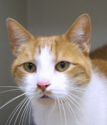 Adopt Shelter Cat Month