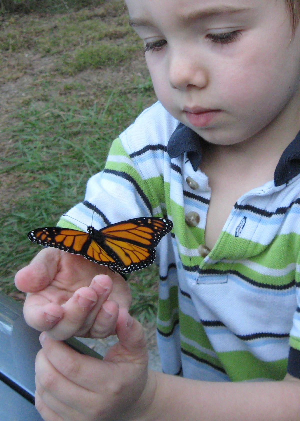a monarch butterfly rests on the wrist of a young child