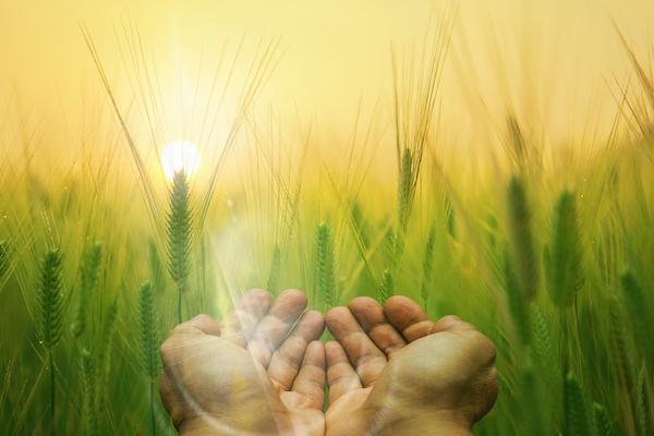 The Prospering of a Thankful Attitude