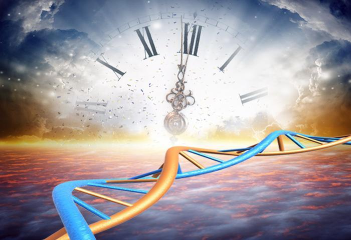 Programmed Longevity or Universal Timekeeping
