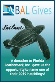 BAL Gives names Florida Leatherback hatchling