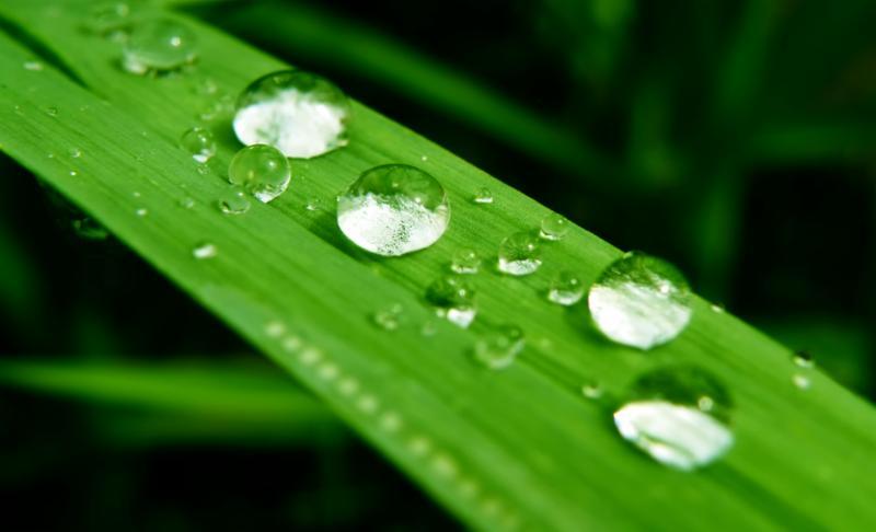 water_drops_on_leaf.jpg
