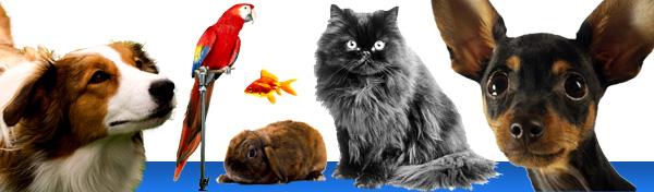 pets-banner.jpg