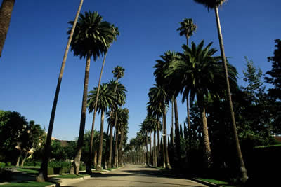 palm-tree-path.jpg