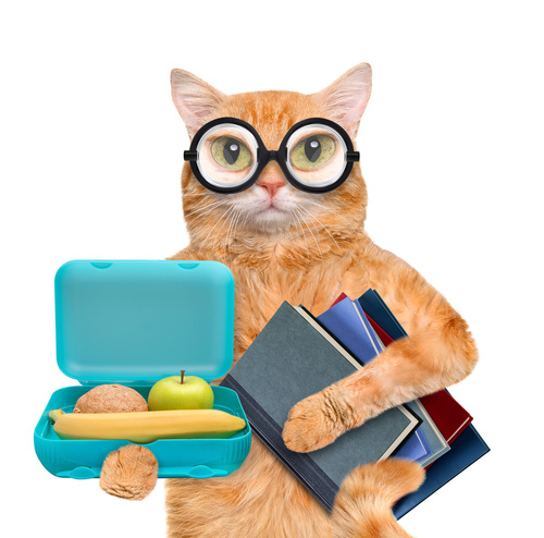 Cat Lunchbox Books-copyrighted image