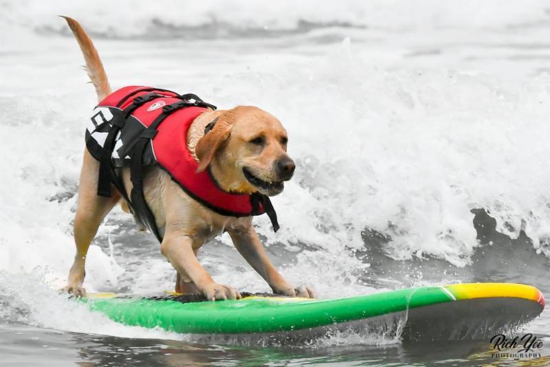 8-20-18 - Dog Surfing - Rich Yee